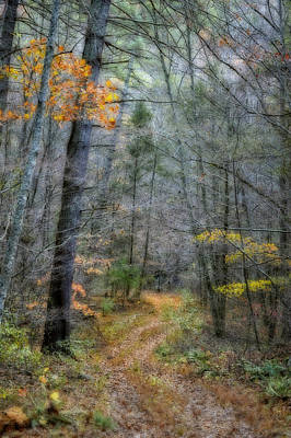Kathy Jennings Photograph - Path At Panther Falls by Kathy Jennings