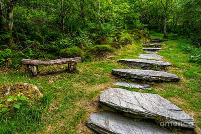 Path Into The Forest Print by Adrian Evans