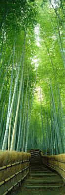 Bamboo Fence Photograph - Path Through Bamboo Forest Kyoto Japan by Panoramic Images