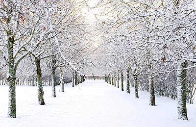 Pathway In Snow Print by Marius Sipa