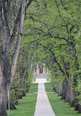 Csu Photograph - Pathway In The Trees by Trent Mallett