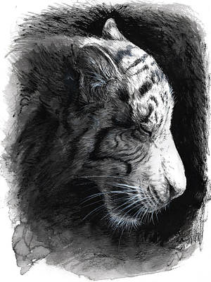 Tiger Drawing - Patience by Danielle Trudeau
