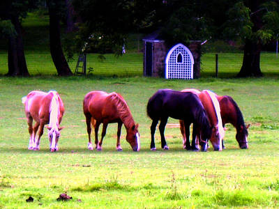 Solebury Photograph - Paxon Clydesdales by Kit Dalton