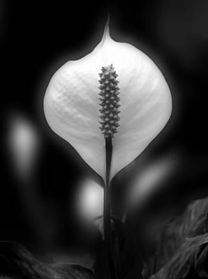 Peace Lily Print by Nhi Ho Thi Xuan