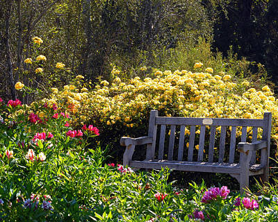 Flower Gardens Photograph - Peaceful by Amy Fose