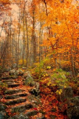 Kathy Jennings Photograph - Peaceful Pathway by Kathy Jennings