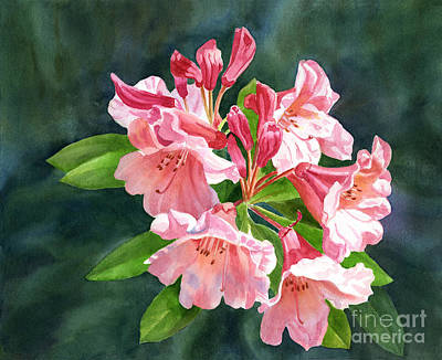 Peach Colored Rhododendron Flowers Dark Background Print by Sharon Freeman