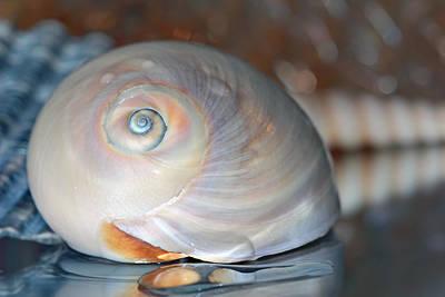 Shells Photograph - Peach Shell by Angela Murdock