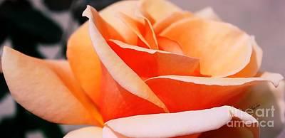 Roses Photograph - Peach Splendor by Sharon Johnston