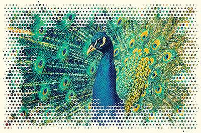 Peacock Art Print by Angela Doelling AD DESIGN Photo and PhotoArt