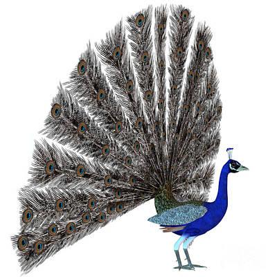 Pheasant Digital Art - Peacock Display by Corey Ford