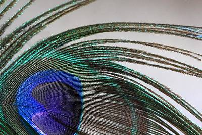 Abstract Photograph - Peacock Feather Art by Angela Murdock