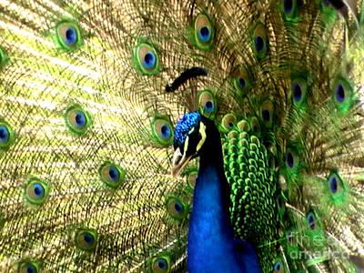 Peacock Print by Toon De Zwart