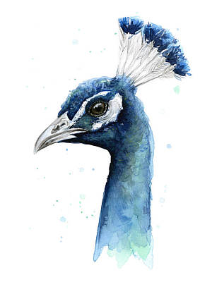 Peacock Watercolor Original by Olga Shvartsur
