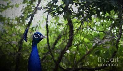 Emu Digital Art - Peacock....photo D by Barbara Dalton