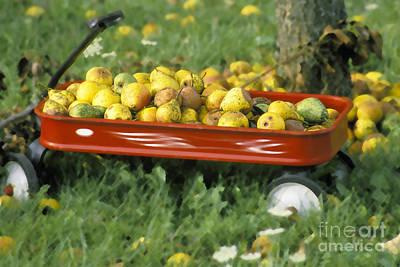 Pears In A Wagon Print by Gordon Wood