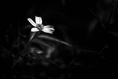 Sepia Flowers Photograph - Peddling Slow Bw by Marvin Spates