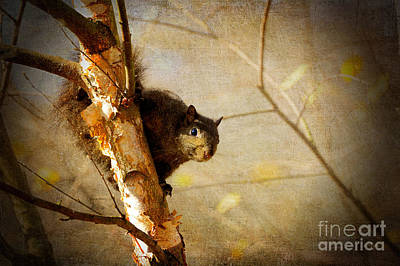 Squirrel Digital Art - Peek-a-boooo by Lois Bryan
