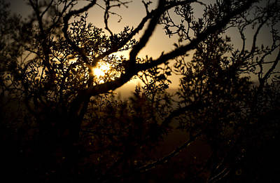 Mike Hill Photograph - Peeking Sun by Mike Hill