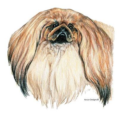 Pets Drawing - Pekingese by Kathleen Sepulveda