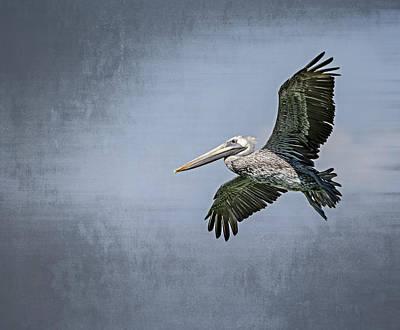 Pelican Flight Print by Carolyn Marshall
