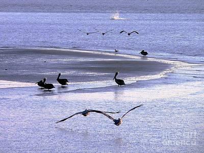Pelican Island Print by Al Powell Photography USA
