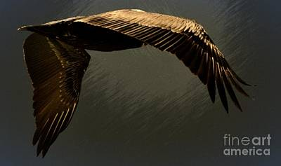 Digital Art - Pelican Iv by Frank Williams