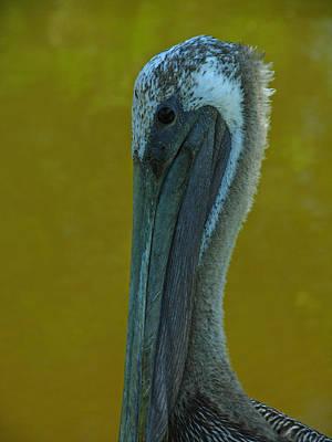 Pelican Original by Juergen Roth