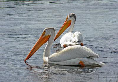 Lone Pelican Photograph - Pelican Pair At Owens River Eastern Sierra Photo by Kim Hawkins Eastern Sierra Gallery
