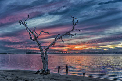 Lone Pelican Photograph - Pelican Point Sunset by David Hamments