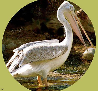 The View Mixed Media - Pelican Portal by Debra     Vatalaro