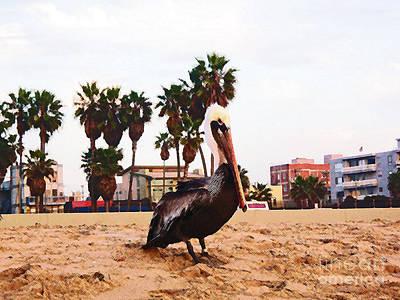 Venice Beach Digital Art - Pelican Portrait by Daniele Smith