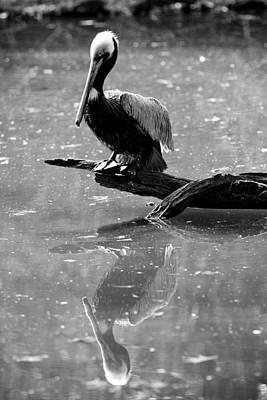 Pelican Reflections Original by Dustin K Ryan