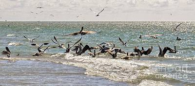Photograph - Pelicans Feeding by Frank Williams