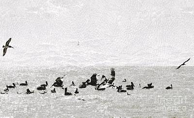 Photograph - Pelicans Sunbathing by Frank Williams