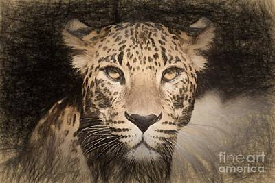 Creativity Drawing - Pencil Sketch With The Image Of A Spotted Jaguar by Lubos Chlubny