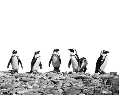 Penguin Photograph - Penguins by Delphimages Photo Creations