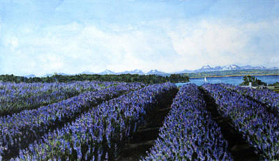 Penn Cove Lavender Print by Perry Woodfin