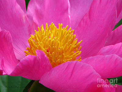 Wiccan Photograph - Peony Power by Roxy Riou
