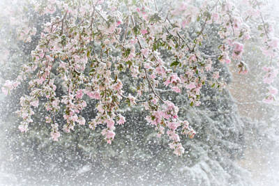 Peppermint Spring Print by Diane Alexander