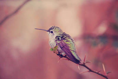 Photograph - Perch by Laurie Search