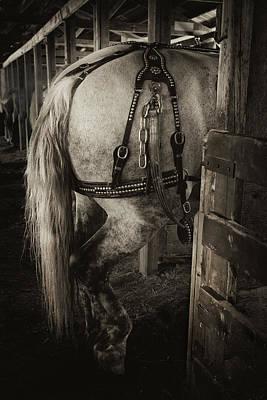 Percheron Draft Horse Print by Theresa Tahara