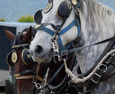 Percheron Horses Print by Theresa Tahara