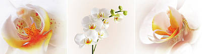 Orchids Photograph - Perfection - White Orchid Triptych by Gill Billington