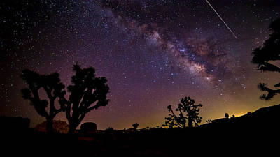 Perseid Meteor Over Joshua Tree Print by Peter Tellone
