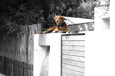 Dogs Photograph - Pet Dog by Sumit Mehndiratta