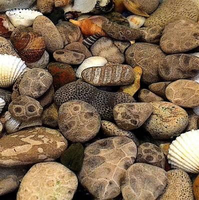Petoskey Stones With Shells L Print by Michelle Calkins