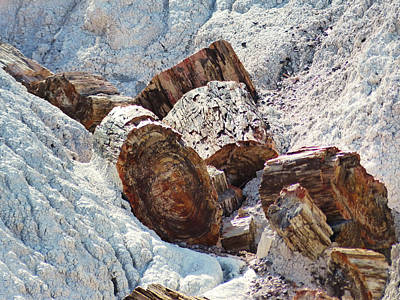 Landscape Photograph - Petrified Wood - Horizontal by Marcia Socolik