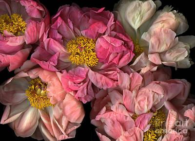 Petticoats Original by Christian Slanec