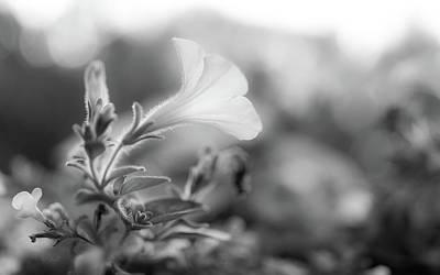 Petunia Impressions Print by Bob Orsillo